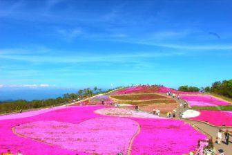 芝桜(茶臼山高原)