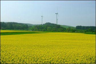青森県横浜町の菜の花畑