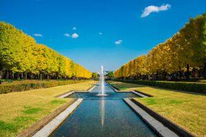 昭和記念公園の紅葉アイキャッチ画像