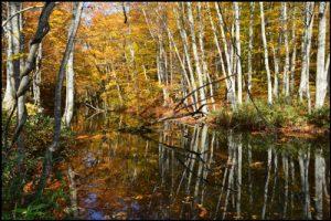 蔦沼の紅葉アイキャッチ画像