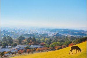 奈良公園(若草山)の紅葉