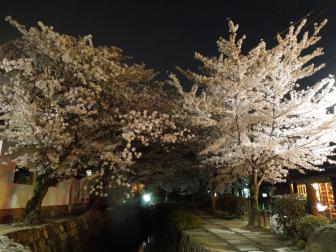 哲学の道の夜桜