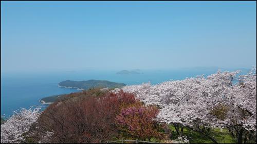紫雲出山の桜アイキャッチ画像