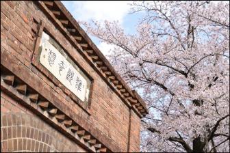 ねじりまんぽと桜