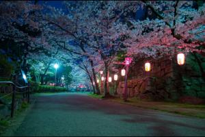 和歌山城の夜桜ライトアップのアイキャッチ画像