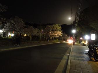 銀閣寺道バス停までの桜