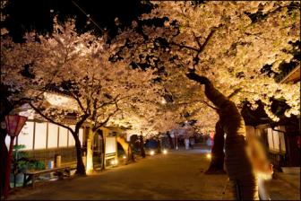 がいせん桜の夜間ライトアップのアイキャッチ画像