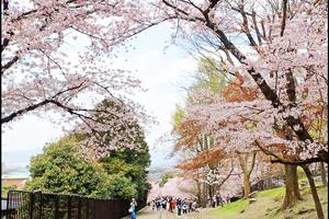 蹴上インクラインの桜のアイキャッチ画像