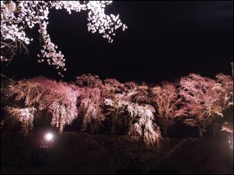 鶴山公園/津山城の夜桜ライトアップ