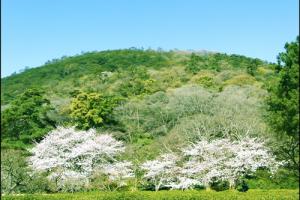 栗林公園の桜アイキャッチ画像