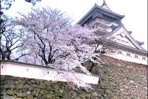 小倉城の桜アイキャッチ画像
