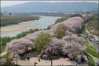 さくらであい館展望塔からの桜の眺め