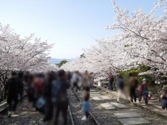 蹴上インクラインの桜と花見客