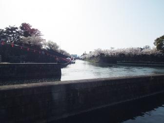 岡崎疎水の桜回廊