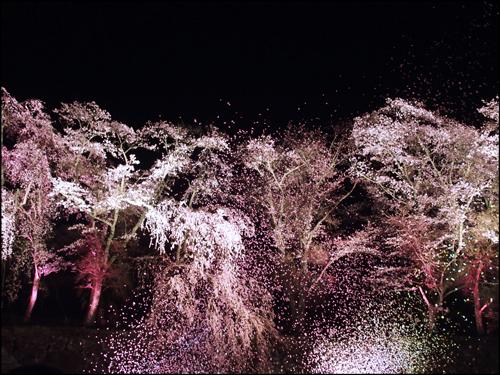 鶴山公園/津山城の夜桜ライトアップのアイキャッチ画像
