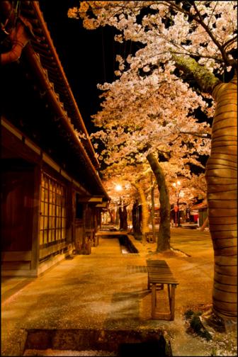 がいせん桜の夜間ライトアップ