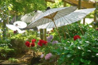 鶴岡八幡宮の神苑ぼたん庭園