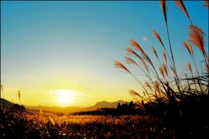 曾爾高原のススキのアイキャッチ画像