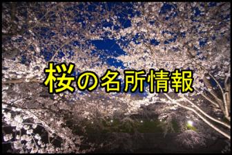 桜の名所一覧